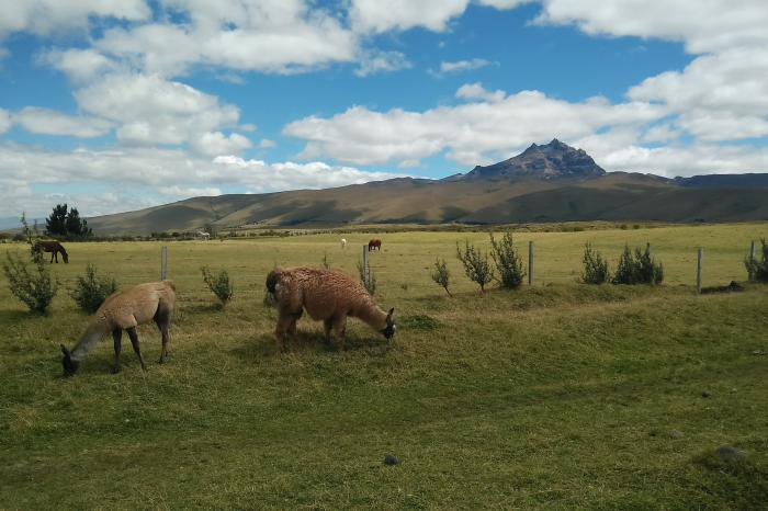 Parel van de Andes