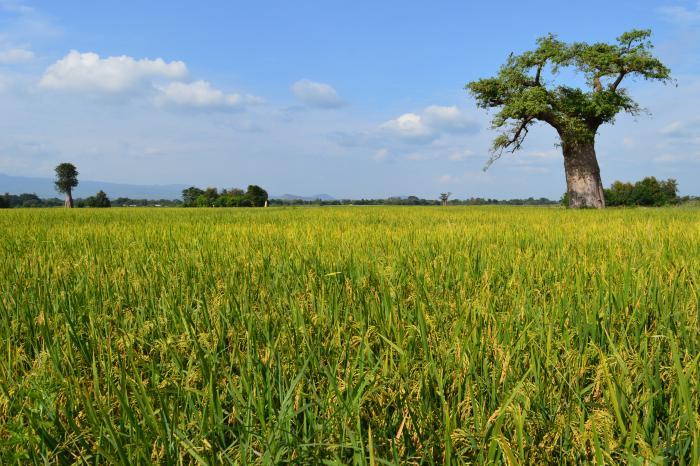 Ine loopt 10km #rondjekot voor #FoodHeroes in Oost-Afrika