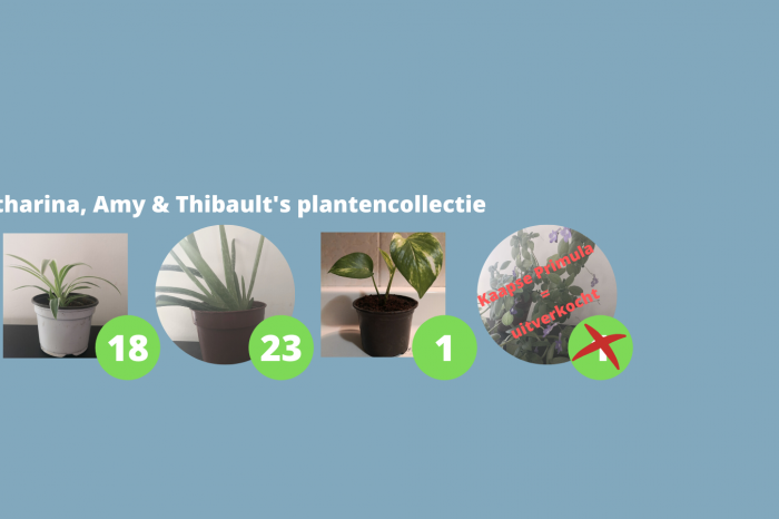 Katharina, Amy en Thibault's plantencollectie moet weg