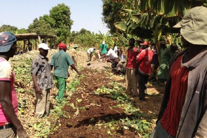 Bananen voor Dakar